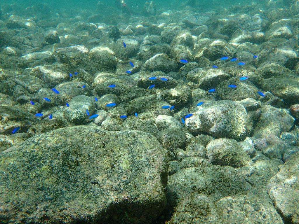 ちょっと顔を水につけただけで、キラキラした魚たちの世界を覗けます。