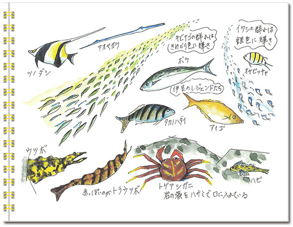 sketch_izu-autumn02.jpg