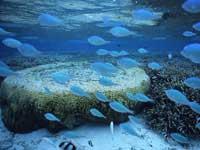 グアムサンゴ礁観察シュノーケリングエコツアー