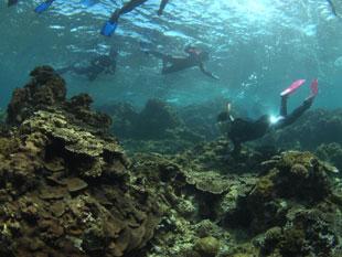 望星丸のサンゴ