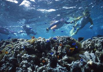 石垣島サンゴ礁観察
