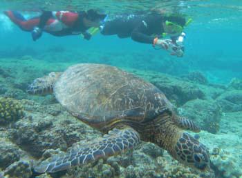 ハワイ島エコツアー