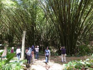 背の高い竹林