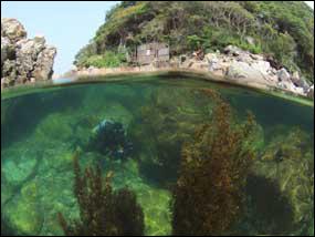 原発取水口予定地の目の前の海