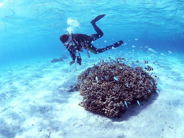 サンゴを守ろう!