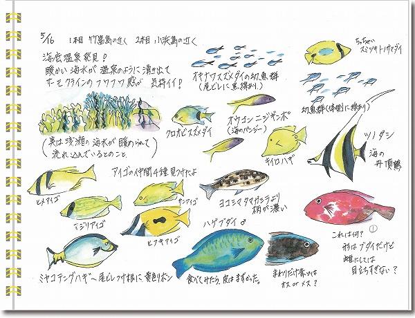石垣島2015年5月16日