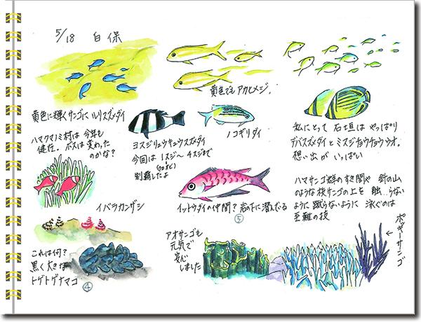 石垣島2015年5月18日白保