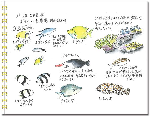 石垣島2015年5月15日午後