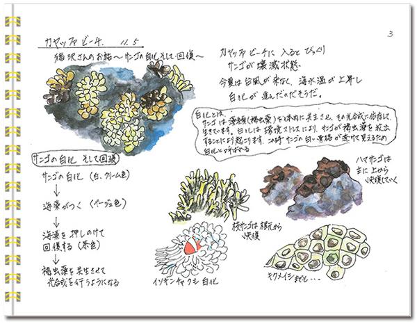 sketch_miyako03.jpg