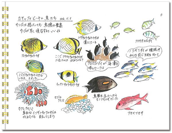sketch_miyako04.jpg