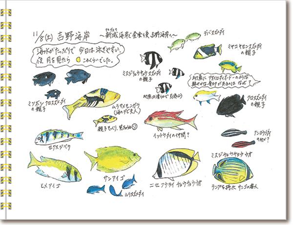 宮古島2014年11月8日吉野海岸